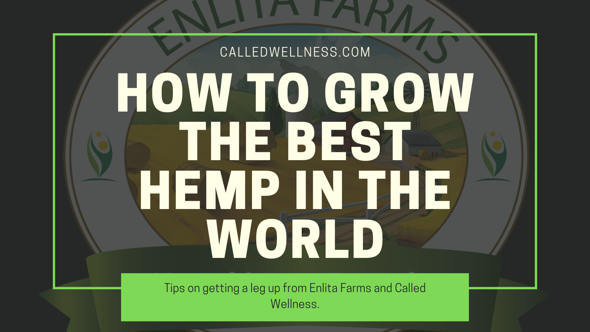 How to grow the best hemp in the world